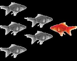 goudvis
